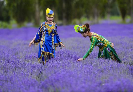 Những cánh đồng lavender nổi tiếng thế giới - Ảnh 4.