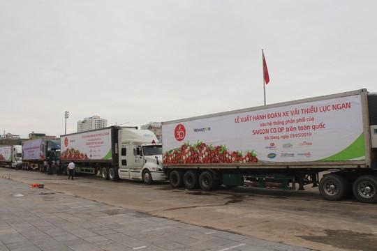 Đoàn xe container nối đuôi chở trái vải Bắc Giang vào Nam