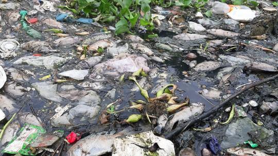 Cá chết trắng gây ô nhiễm tại Khe Cạn, người dân đóng cửa cả ngày lẫn đêm - Ảnh 3.