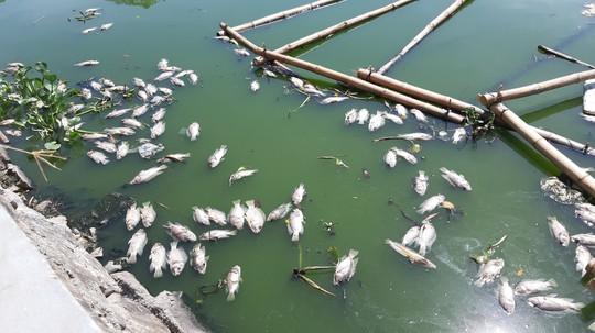 Đà Nẵng: Cá chết nổi lềnh bềnh trên hồ Thạc Gián là do… nắng nóng? - Ảnh 2.