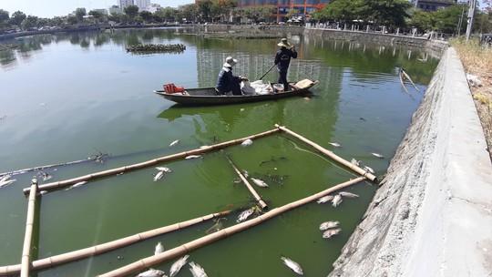 Đà Nẵng: Cá chết nổi lềnh bềnh trên hồ Thạc Gián là do… nắng nóng? - Ảnh 5.