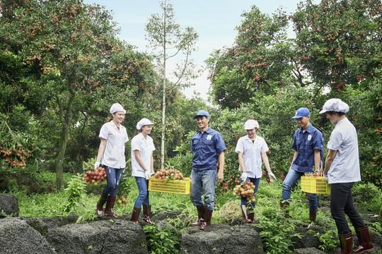 Phát triển cây chôm chôm làm nguyên liệu mỹ phẩm - Ảnh 1.