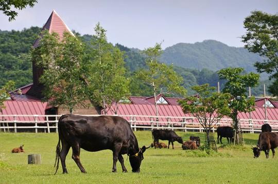 Top 10 mô hình chăn nuôi hái ra tiền tại Việt Nam - Ảnh 5.