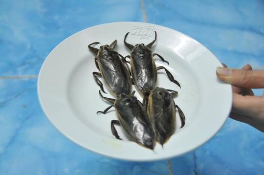 Top 10 mô hình chăn nuôi hái ra tiền tại Việt Nam - Ảnh 1.