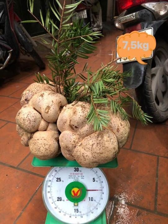 Một cây nấm giá 10 triệu đồng, người Việt vẫn đổ tiền mua? - Ảnh 2.