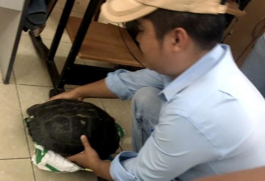 Rùa Răng quý hiếm bày bán công khai giữa trung tâm TP HCM - ảnh 3