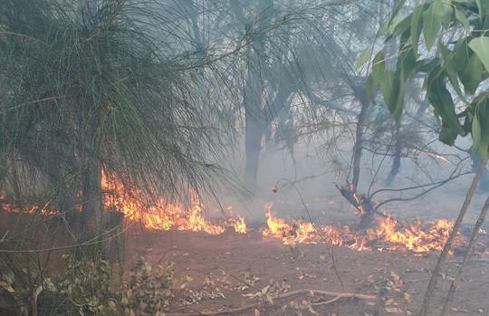 Phú Yên: Cháy lớn hàng chục hecta rừng phòng hộ ven biển - Ảnh 1.