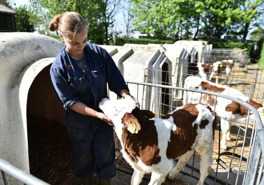 Nông trại của nông dân Cô Gái Hà Lan: Diện tích mỗi nông trại bằng 140 sân vận động - Ảnh 3.