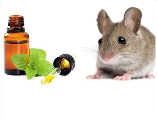 5 mẹo đuổi chuột tự nhiên không cần dùng thuốc - Ảnh 3.