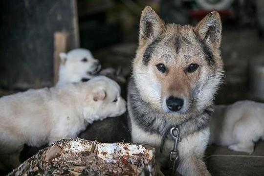 Hàn Quốc đóng cửa chợ thịt chó nổi tiếng - Ảnh 1.
