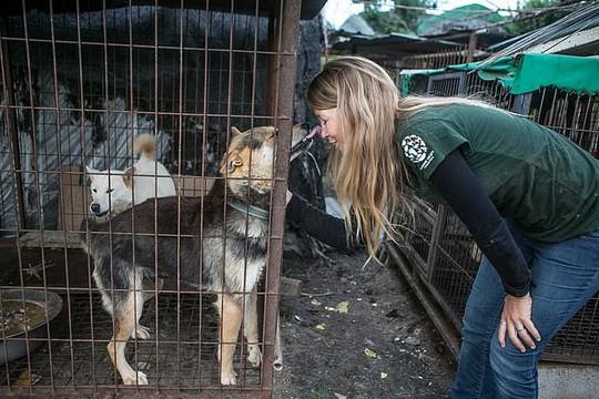 Hàn Quốc đóng cửa chợ thịt chó nổi tiếng - Ảnh 3.