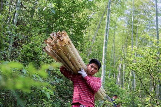 Làng làm giấy thủ công hơn 1.300 năm ở Trung Quốc - Ảnh 2.