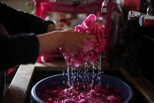 Người Syria hồi sinh bằng hạt giống vua của các loài hoa hồng - Ảnh 7.