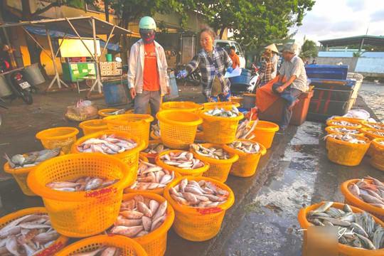 Mãn nhãn tại cảng cá lâu đời ở đảo ngọc Phú Quốc - Ảnh 7.