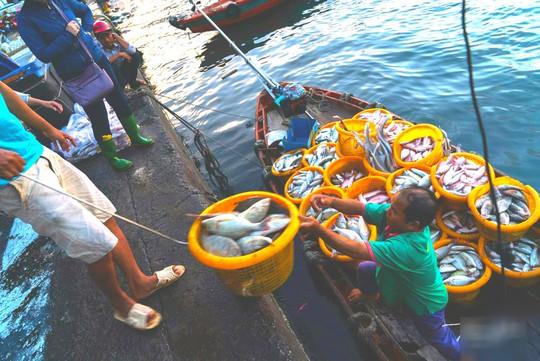 Mãn nhãn tại cảng cá lâu đời ở đảo ngọc Phú Quốc - Ảnh 4.