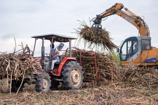 TTC Sugar hỗ trợ kịp thời, thiết thực cho người trồng mía