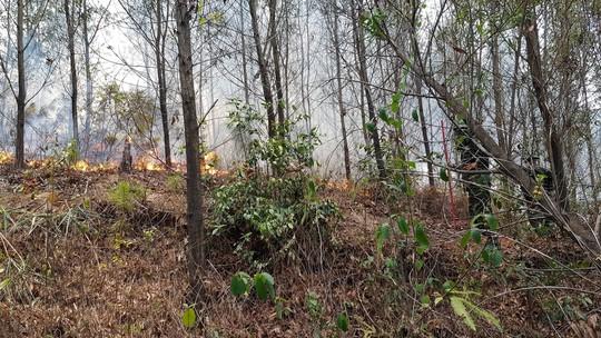 Huy động hơn 1.000 người tham gia dập lửa, cứu rừng thông đặc dụng ở TP Huế - Ảnh 2.