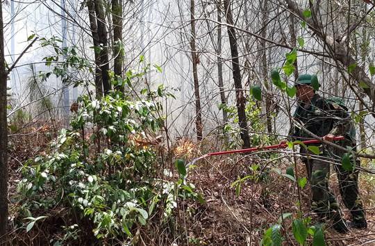 Huy động hơn 1.000 người tham gia dập lửa, cứu rừng thông đặc dụng ở TP Huế - Ảnh 1.