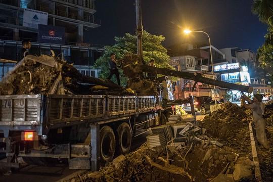 Hà Nội: Di dời hàng trăm cây hoa sữa về bãi rác Nam Sơn lớn nhất thành phố - ảnh 3