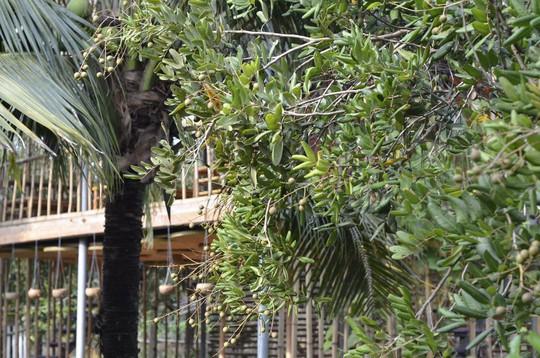 Homestay kiểu nhà tranh giữa vườn trái cây ở Tiền Giang - Ảnh 5.