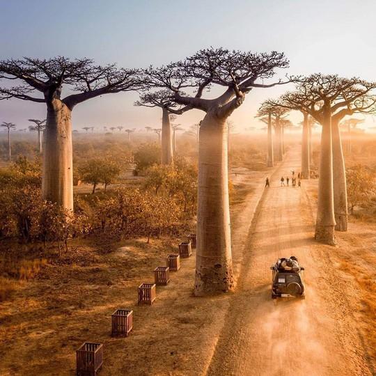 Đại lộ cây lộn ngược như đường dẫn tới hành tinh khác - Ảnh 1.