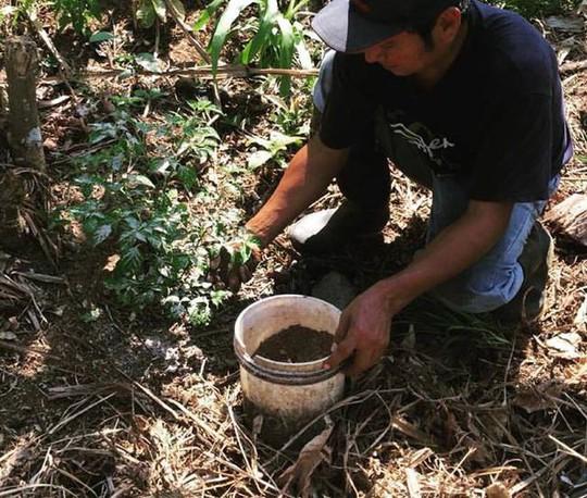 Ớt Aji Charapita mọc hoang dại nhưng có giá hơn nửa tỉ đồng/kg - Ảnh 9.
