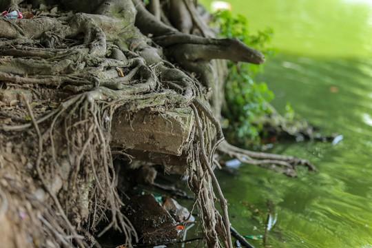 Bờ kè quanh hồ Gươm sụt lún đã nhiều năm nhưng chưa được khắc phục - ảnh 9