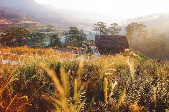 Những homestay như tổ chim giữa rừng Đà Lạt - Ảnh 1.