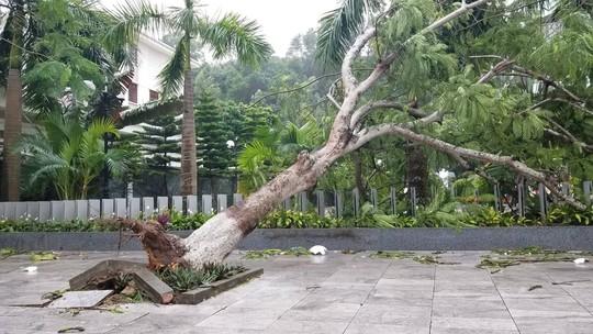 Cận cảnh nơi bão số 2 vừa quét qua - Ảnh 6.