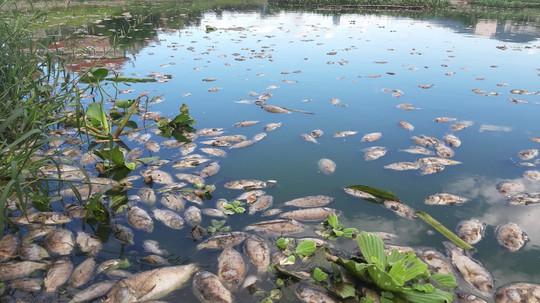 Đà Nẵng: Cá chết trắng, nổi xếp lớp tại hồ điều tiết Trung Nghĩa - Ảnh 2.