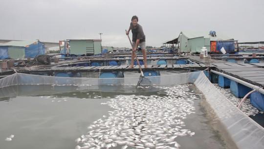 Nguyên nhân cá ở Long Sơn chết hàng loạt là do nhiễm ký sinh trùng quả dưa - Ảnh 1.