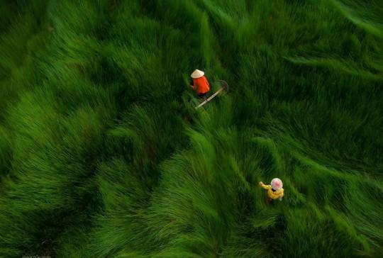 Phong cảnh, con người khắp 3 miền đất Việt đẹp sững sờ qua ảnh - Ảnh 13.