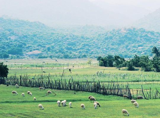 """Gọi tên những điểm """"check-in"""" ở Ninh Thuận mùa lễ hội Katê - Ảnh 14."""