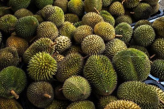 5 điều ít biết về vua trái cây sầu riêng - Ảnh 3.