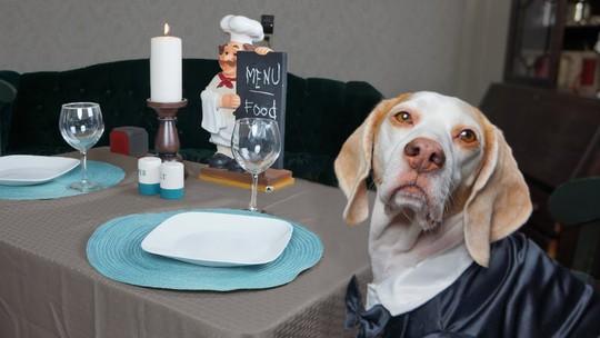 New York tổ chức tuần lễ nhà hàng phục vụ chó - Ảnh 1.