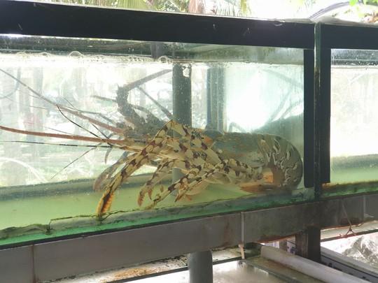 Nhà hàng ở Đà Nẵng lý giải hóa đơn bữa ăn hải sản 85 triệu đồng - Ảnh 3.