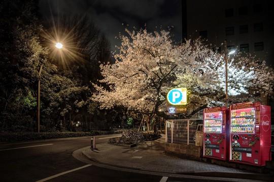 Vẻ đẹp của máy bán hàng tự động lẻ loi ven đường - Ảnh 6.