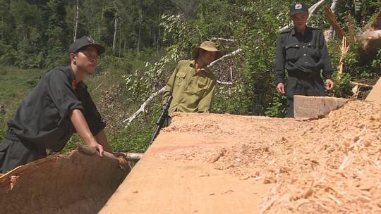 Điều công an khác địa bàn đi triệt phá đường dây khai thác gỗ lậu cực lớn - Ảnh 3.