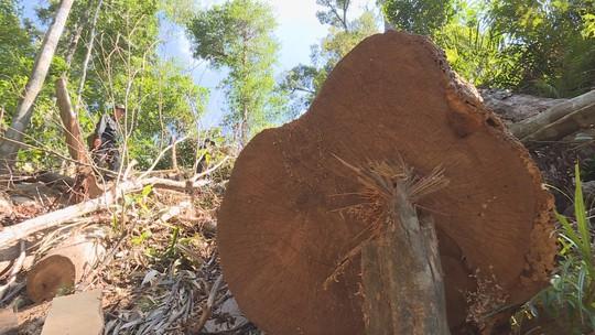 Điều công an khác địa bàn đi triệt phá đường dây khai thác gỗ lậu cực lớn - Ảnh 2.