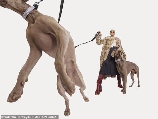 Họa mi Celine Dion gây sốc với loạt ảnh quái lạ - Ảnh 6.