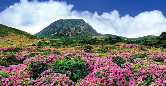 Thăm đảo Jeju, đừng quên chinh phục núi Hallasan hùng vĩ - Ảnh 1.