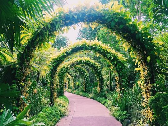 Từ mưa trong nhà đến nấc thang lên thiên đường, ra mà xem Singapore ngát xanh này! - Ảnh 8.