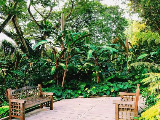 Từ mưa trong nhà đến nấc thang lên thiên đường, ra mà xem Singapore ngát xanh này! - Ảnh 9.