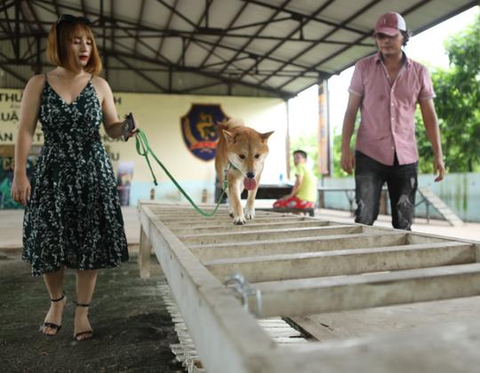 """Nhà sản xuất phản hồi tranh cãi chọn chó Nhật vào phim """"Cậu Vàng"""" - Ảnh 2."""