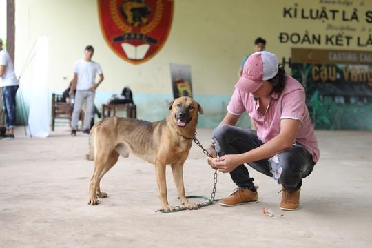 """Nhà sản xuất phản hồi tranh cãi chọn chó Nhật vào phim """"Cậu Vàng"""" - Ảnh 4."""