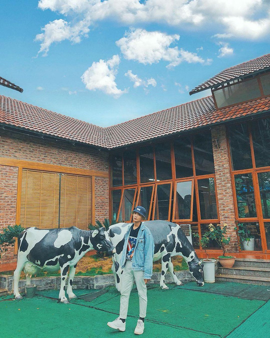 Trại bò sữa check-in tuyệt đẹp ở Mộc Châu thu hút giới trẻ - Ảnh 1.