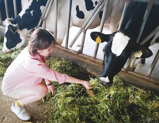 Trại bò sữa check-in tuyệt đẹp ở Mộc Châu thu hút giới trẻ - Ảnh 5.
