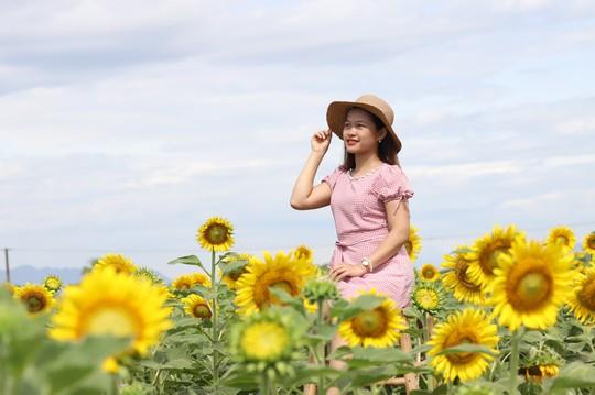 Phát sốt với vườn hoa hướng dương mới xuất hiện ở Quảng Nam - Ảnh 1.