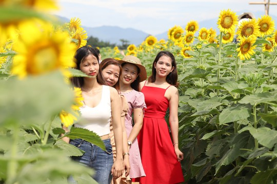 Phát sốt với vườn hoa hướng dương mới xuất hiện ở Quảng Nam - Ảnh 19.