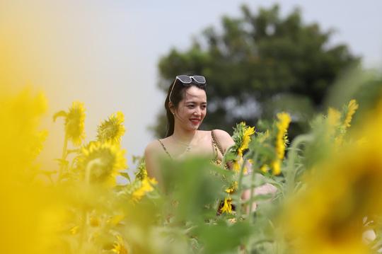 Phát sốt với vườn hoa hướng dương mới xuất hiện ở Quảng Nam - Ảnh 17.